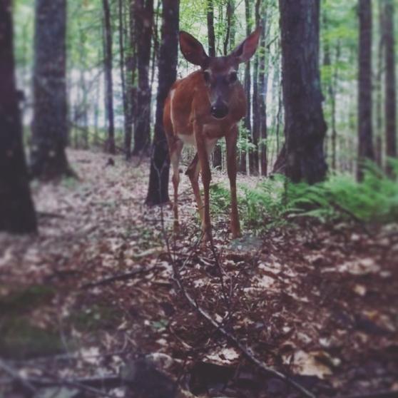 deerpic1.png